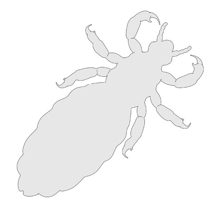 head louse: 2d cartoon illustration of louse