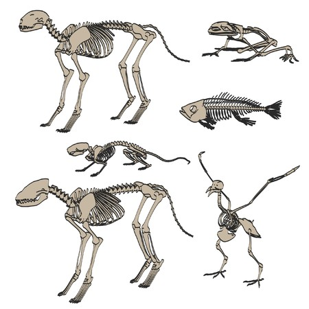 2d cartoon illustration of animal skeletons