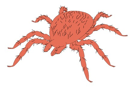 lyme disease: 2d cartoon illustration of tick