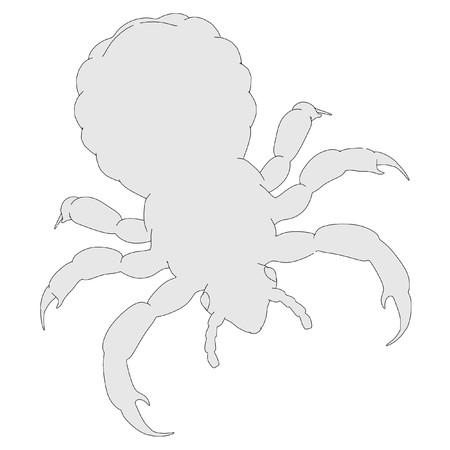 2d cartoon illustration of louse