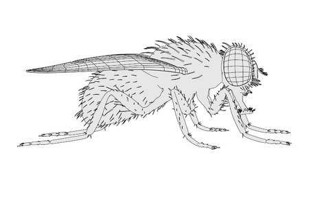 musca: 2d cartoon illustration of musca domestica