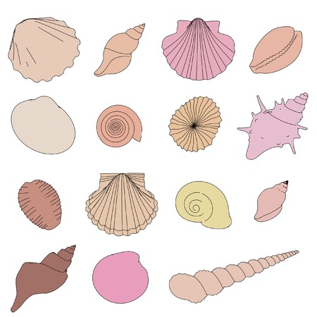 2d cartoon illustration of shells set