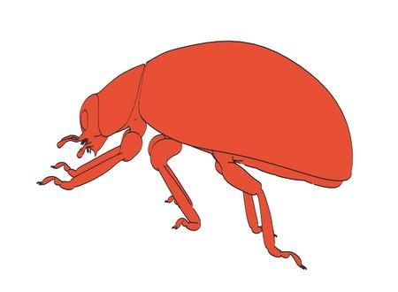 2d cartoon illustration of ladybug