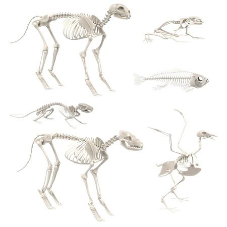realistic 3d render of animal skeletons