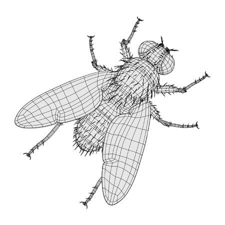 2d cartoon illustration of musca domestica