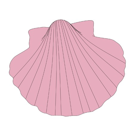 cockle: 2d cartoon illustration of shell