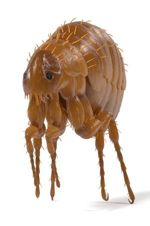 realistic 3d render of flea
