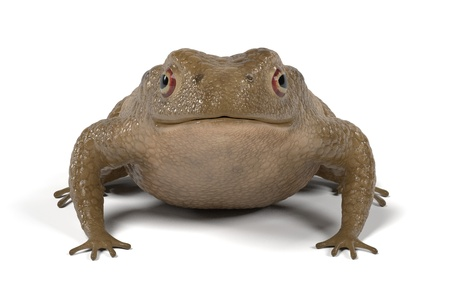 bufo toad: realistic 3d render of toad - bufo bufo