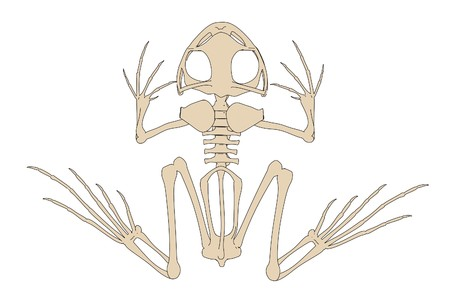 2d cartoon illustration of toad skeleton Stock Photo