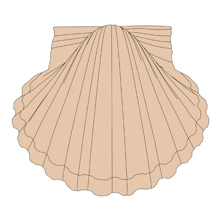clam illustration: 2d cartoon illustration of shell