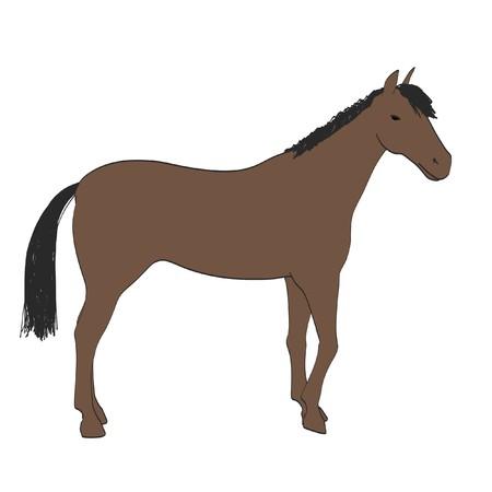 2d cartoon illustration of horse Stock Photo