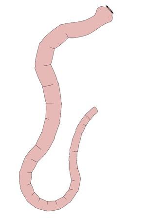 2d cartoon illustration of tapeworm