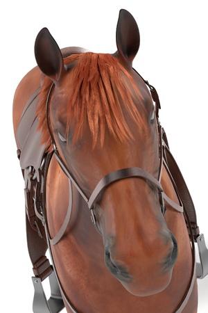 quarter horse: realistic 3d render of horse
