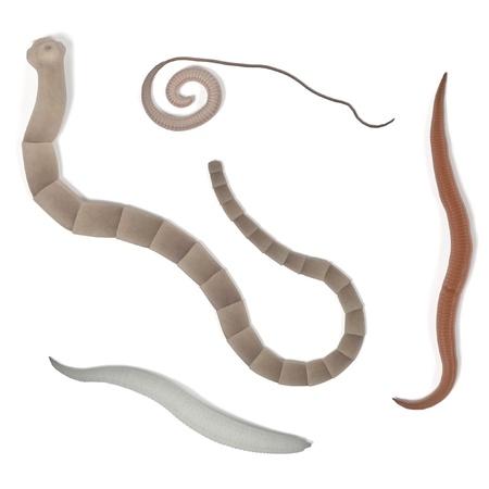ascaris: realistic 3d render of digestive parasites Stock Photo