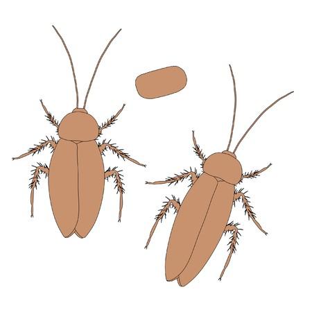 americana: 2d cartoon illustration of cockroach