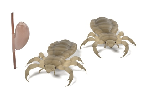 lice: realistic 3d render of lice set Stock Photo