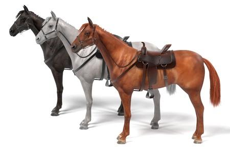 realistic 3d render of horses