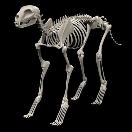 render: realistic 3d render of cat skeleton