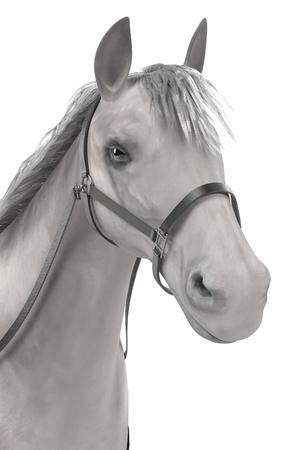 render: realistic 3d render of horse