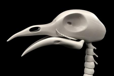 render: realistic 3d render of pigeon skeleton Stock Photo