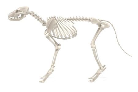 realistic 3d render of dog skeleton
