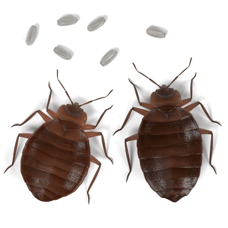 realistic 3d render of bedbug set Archivio Fotografico