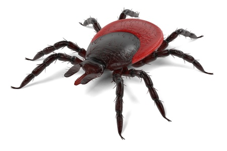 arachnid: realistic 3d render of tick