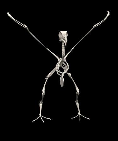 realistic 3d render of pigeon skeleton Stock Photo