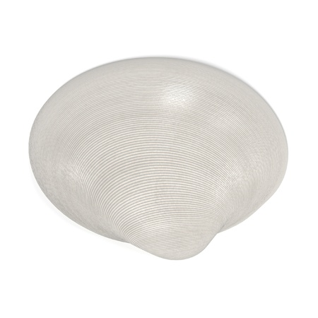 cockle: realistic 3d render of Saxidomus Gigantea (Butter Clam)