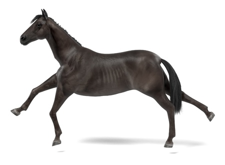 realistic 3d render of black horse Stock Photo