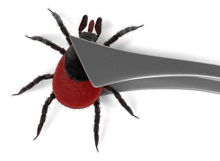 arachnid: 3d render of tick in tweezer Stock Photo
