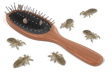 head louse: 3d render of lices on comb Stock Photo