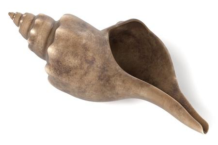 clam illustration: realistic 3d render of Triplofusus Giganteus (Florida Horse Conch) Stock Photo