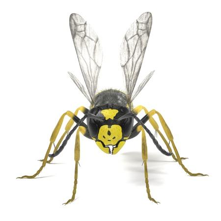 render: realistic 3d render of vespula vulgaris