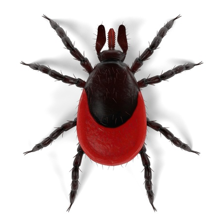 lyme disease: realistic 3d render of tick