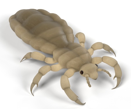 infestation: realistic 3d render of louse Stock Photo