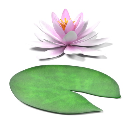 lilly pad: realistic 3d render of water lily