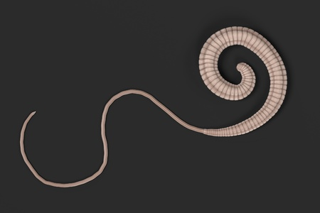 realistic 3d render of whipworm