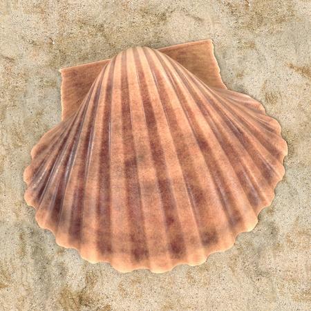cockle: realistic 3d render of Pecten Fumatus (Scallop)