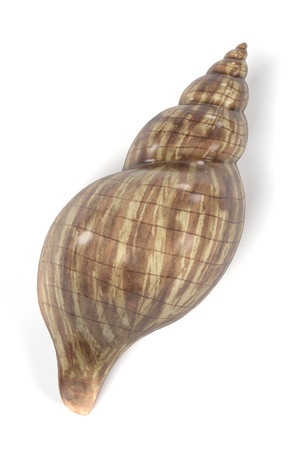 realistic 3d render of shell