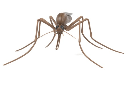 realistic 3d render of anopheles gambiae