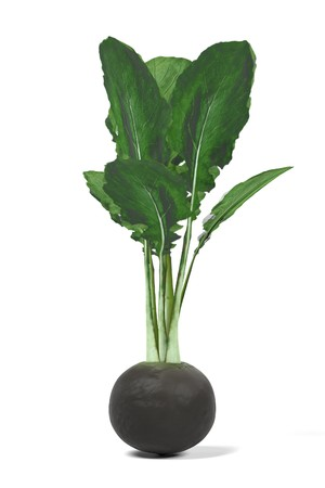 realistic 3d render of black radish