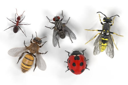 realistic 3d render of common insect Stock Photo