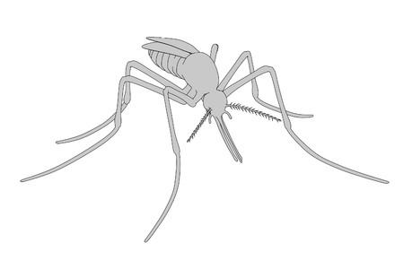 2d cartoon illustration of mosquito
