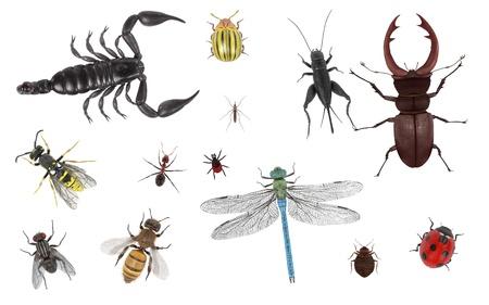 곤충의 현실적인 3D 렌더링 스톡 콘텐츠