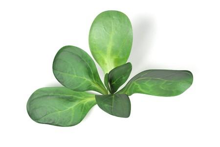 realistic 3d render of lettuce on white backround