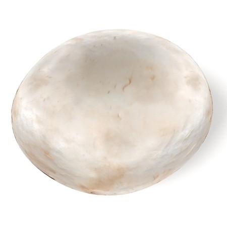 Rendu 3d réaliste de champignon