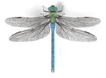 realistic 3d render of emperor dragonfly Stock Photo