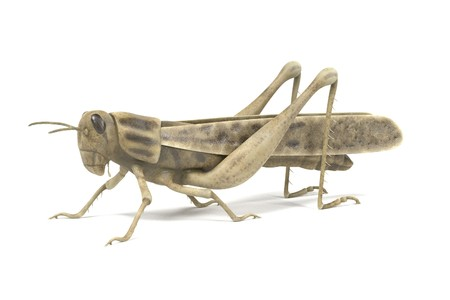 realistic 3d render of grasshopper