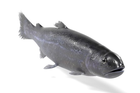 realistic 3d render of trout